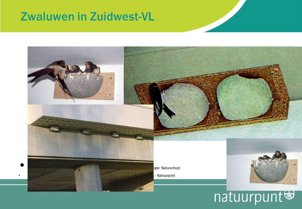 Zwaluwen in Zuidwest-VL foto:s Schweger Naturschutz - Marcel Bex - Natuurpunt