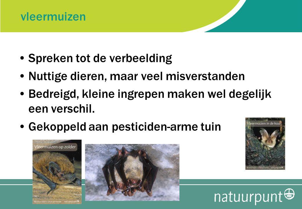 vleermuizen Spreken tot de verbeelding Nuttige dieren, maar veel misverstanden Bedreigd, kleine ingrepen maken wel degelijk een verschil.
