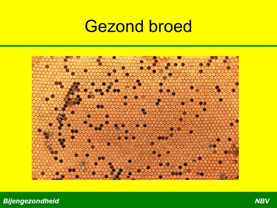 Gezond broed BijengezondheidNBV