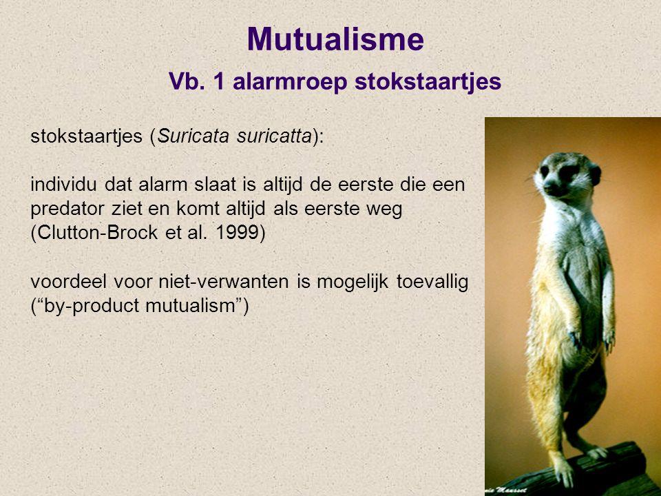 Mutualisme Vb. 1 alarmroep stokstaartjes stokstaartjes (Suricata suricatta): individu dat alarm slaat is altijd de eerste die een predator ziet en kom