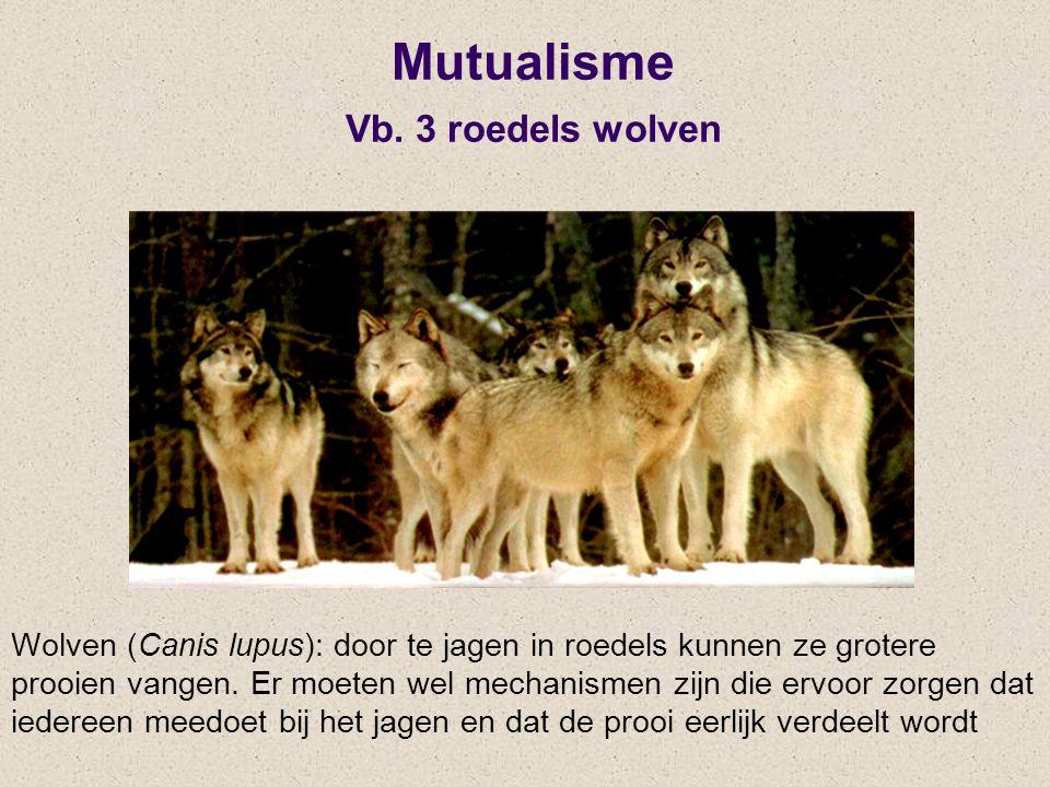 Mutualisme Vb. 3 roedels wolven Wolven (Canis lupus): door te jagen in roedels kunnen ze grotere prooien vangen. Er moeten wel mechanismen zijn die er