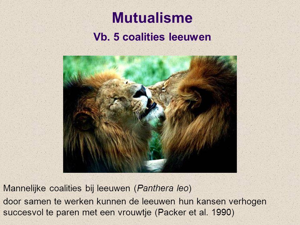 Mutualisme Vb. 5 coalities leeuwen Mannelijke coalities bij leeuwen (Panthera leo) door samen te werken kunnen de leeuwen hun kansen verhogen succesvo