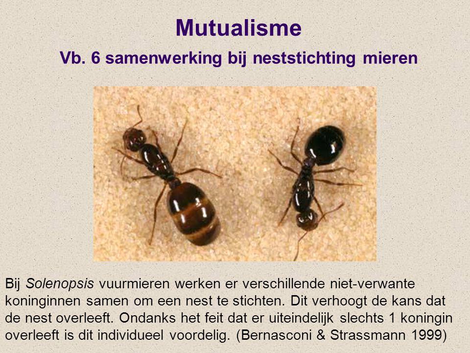 Mutualisme Vb. 6 samenwerking bij neststichting mieren Bij Solenopsis vuurmieren werken er verschillende niet-verwante koninginnen samen om een nest t