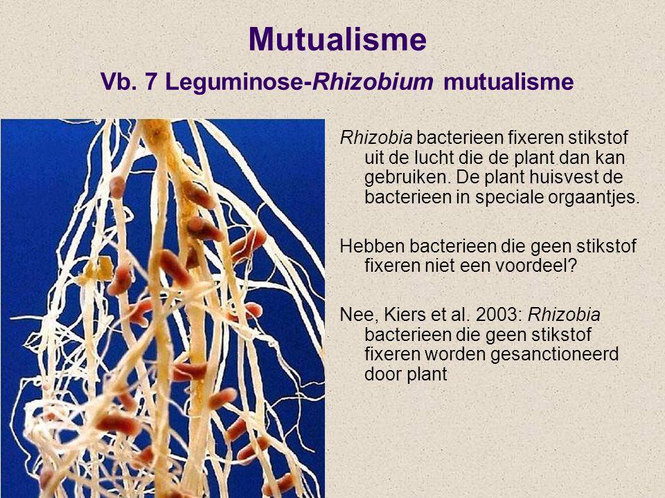 Rhizobia bacterieen fixeren stikstof uit de lucht die de plant dan kan gebruiken. De plant huisvest de bacterieen in speciale orgaantjes. Hebben bacte