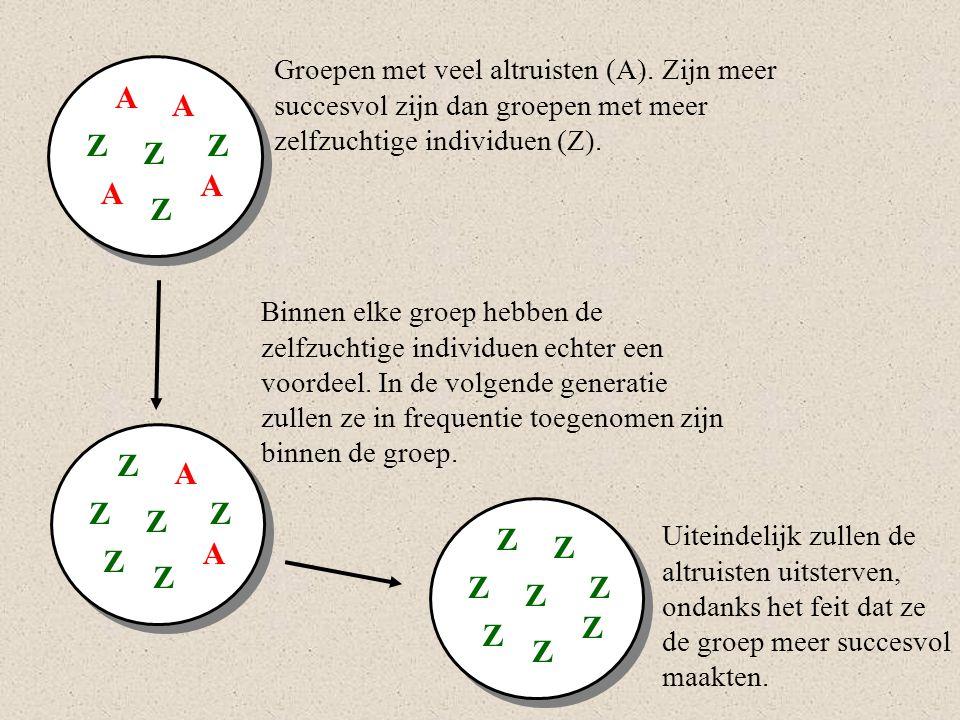 A A A A Z ZZ Z Groepen met veel altruisten (A). Zijn meer succesvol zijn dan groepen met meer zelfzuchtige individuen (Z). Z A Z A Z ZZ Z Z Z Z Z Z ZZ