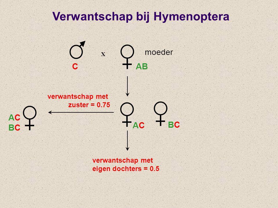 X verwantschap met zuster = 0.75 CAB ACBCACBC ACAC BCBC Verwantschap bij Hymenoptera moeder verwantschap met eigen dochters = 0.5