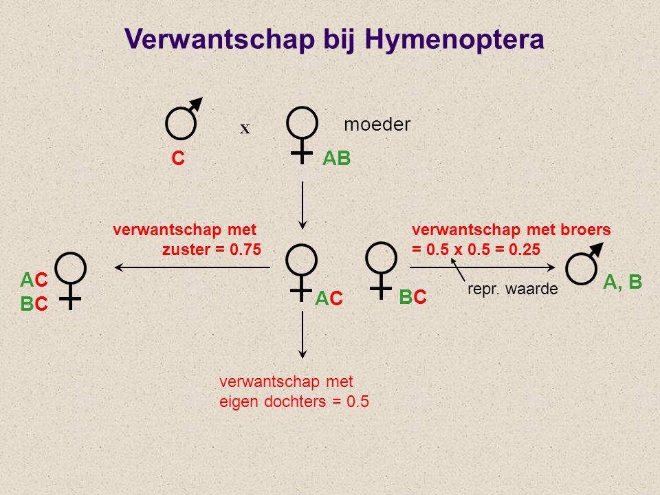 X verwantschap met zuster = 0.75 verwantschap met broers = 0.5 x 0.5 = 0.25 CAB ACBCACBC ACAC BCBC A, B Verwantschap bij Hymenoptera moeder verwantsch