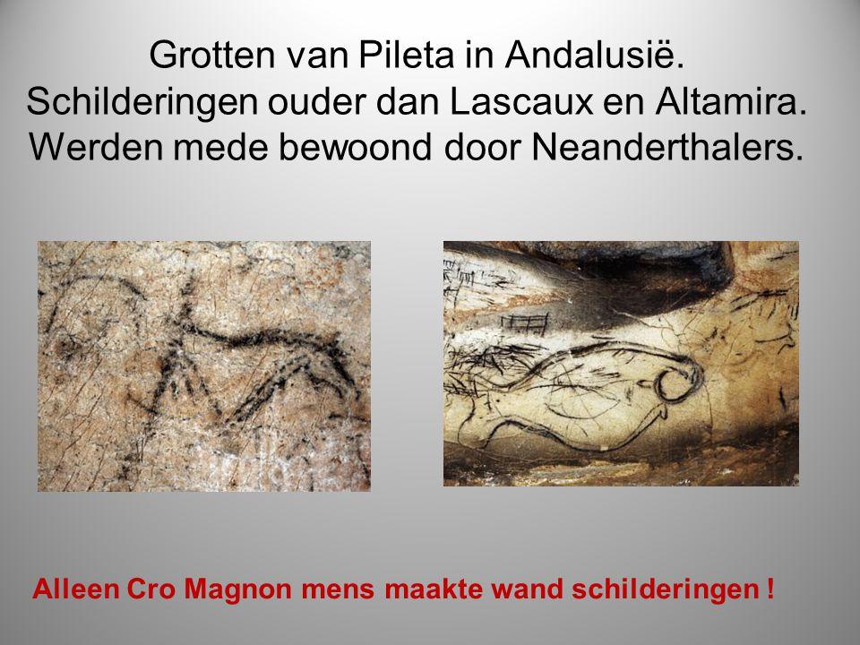 Grotten van Pileta in Andalusië. Schilderingen ouder dan Lascaux en Altamira. Werden mede bewoond door Neanderthalers. Alleen Cro Magnon mens maakte w