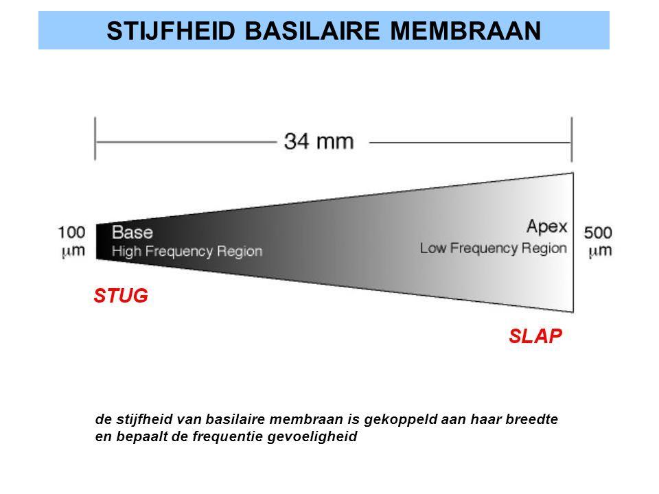 STIJFHEID BASILAIRE MEMBRAAN de stijfheid van basilaire membraan is gekoppeld aan haar breedte en bepaalt de frequentie gevoeligheid