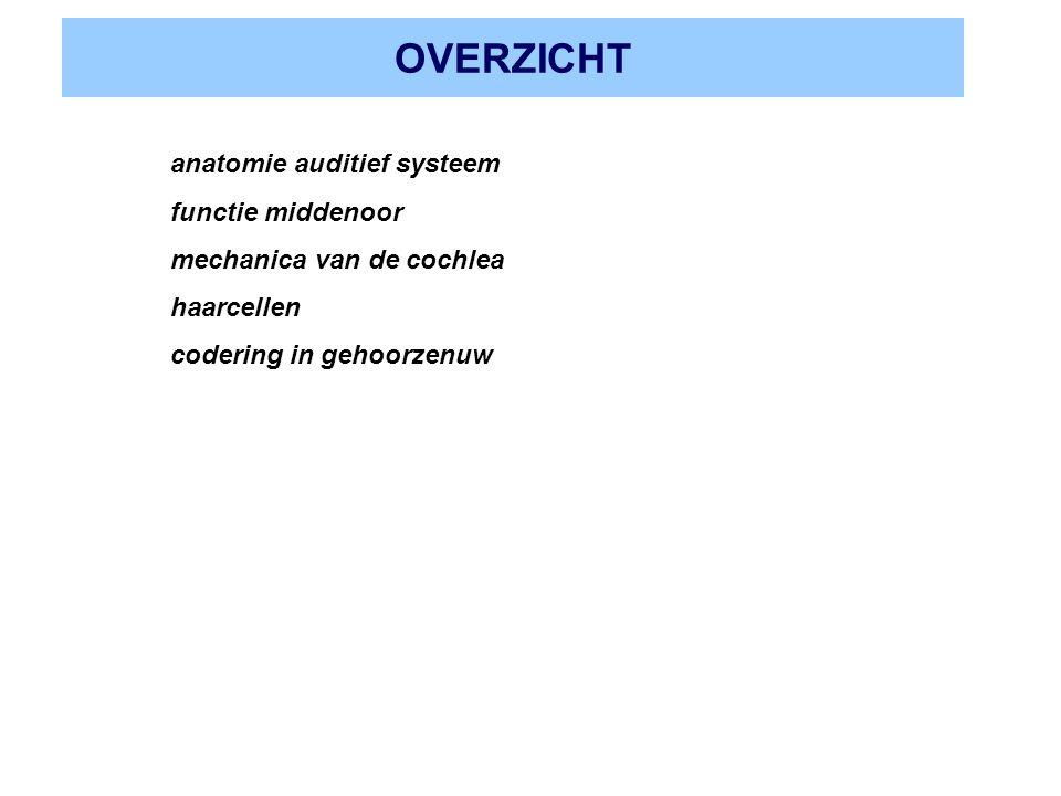 OVERZICHT anatomie auditief systeem functie middenoor mechanica van de cochlea haarcellen codering in gehoorzenuw