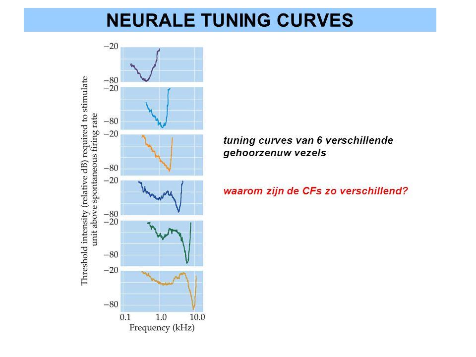 NEURALE TUNING CURVES tuning curves van 6 verschillende gehoorzenuw vezels waarom zijn de CFs zo verschillend?