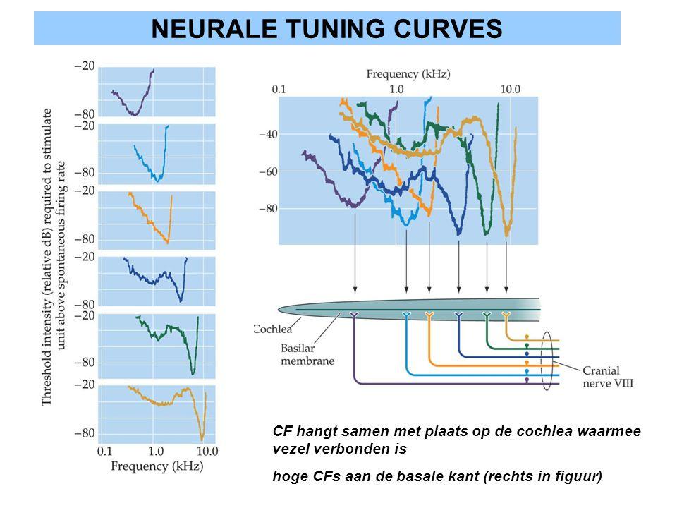 NEURALE TUNING CURVES CF hangt samen met plaats op de cochlea waarmee vezel verbonden is hoge CFs aan de basale kant (rechts in figuur)