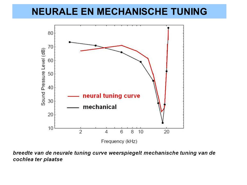 NEURALE EN MECHANISCHE TUNING breedte van de neurale tuning curve weerspiegelt mechanische tuning van de cochlea ter plaatse