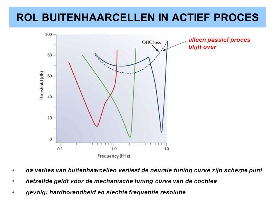 ROL BUITENHAARCELLEN IN ACTIEF PROCES na verlies van buitenhaarcellen verliest de neurale tuning curve zijn scherpe punt hetzelfde geldt voor de mecha