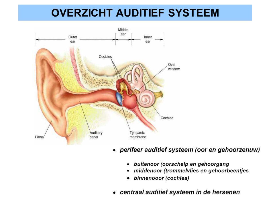 FUNCTIONEEL OVERZICHT binnenoor brengt geluid in lucht over naar vloeistoffen in binnenoor in het binnenoor vertoont de basilaire membraan een frequentie afhankelijk trillingspatroon dit patroon wordt door haarcellen gedetecteerd en doorgegeven aan gehoorzenuwvezels