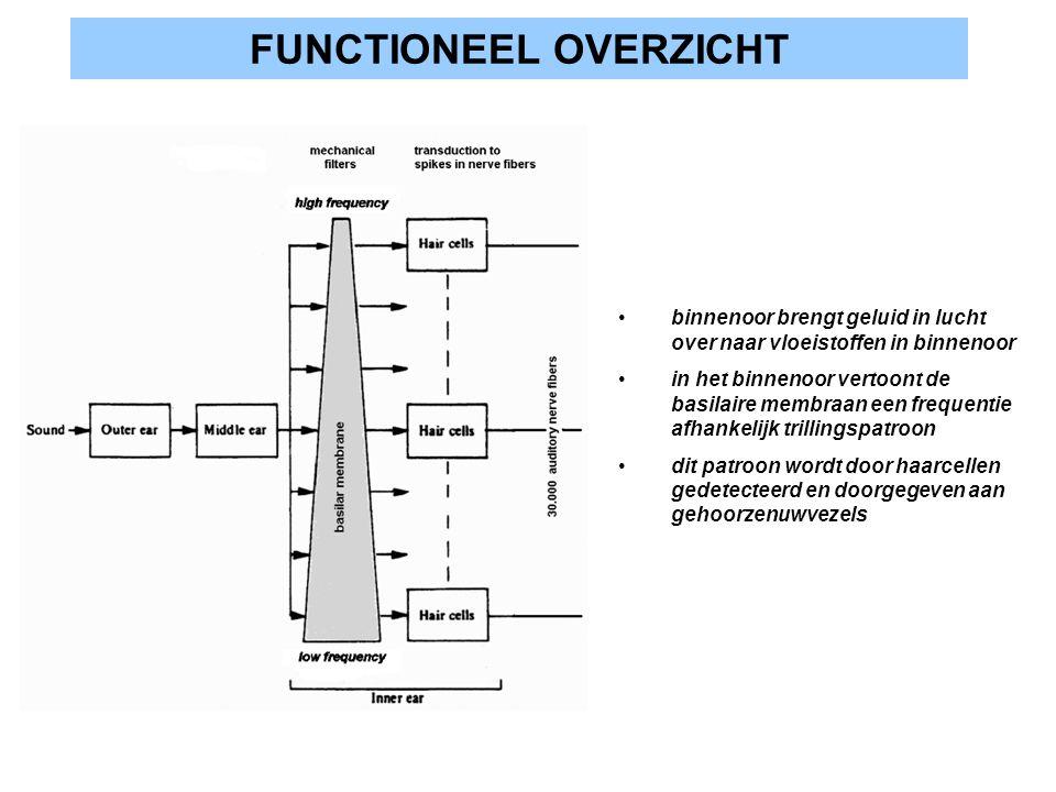 FUNCTIONEEL OVERZICHT binnenoor brengt geluid in lucht over naar vloeistoffen in binnenoor in het binnenoor vertoont de basilaire membraan een frequen