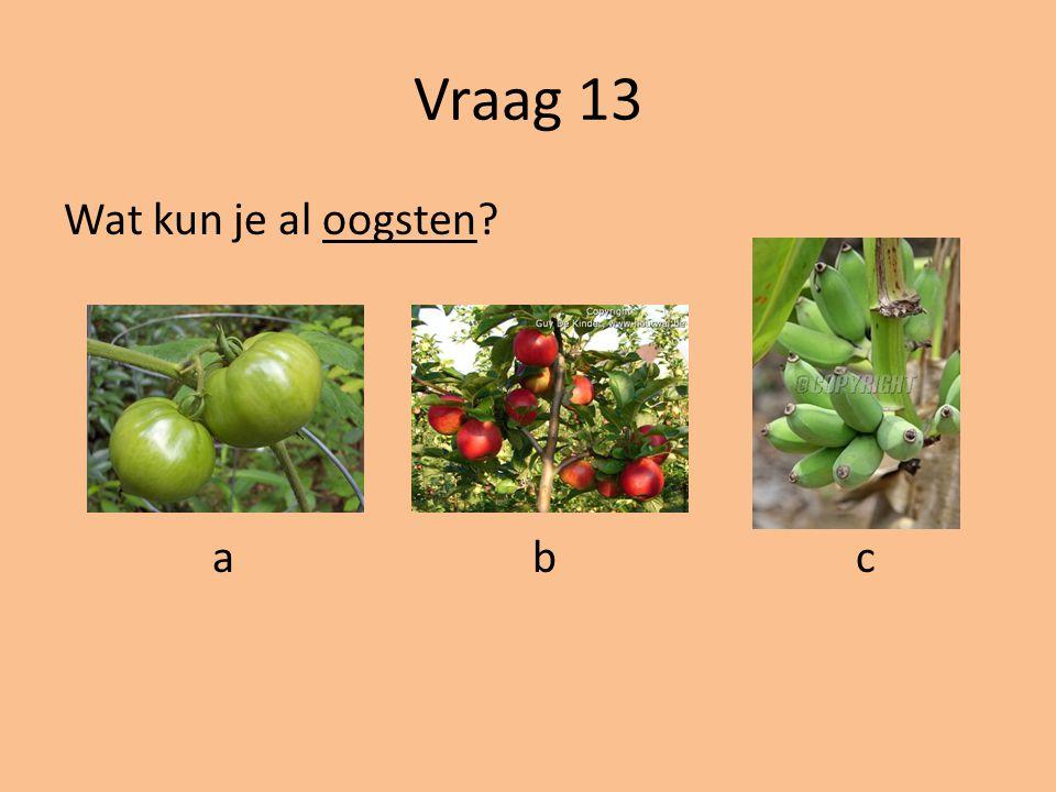 Vraag 12 Wat is een ander woord voor proberen? a.Demonstreren b.Afreageren c.Dirigeren d.Experimenteren