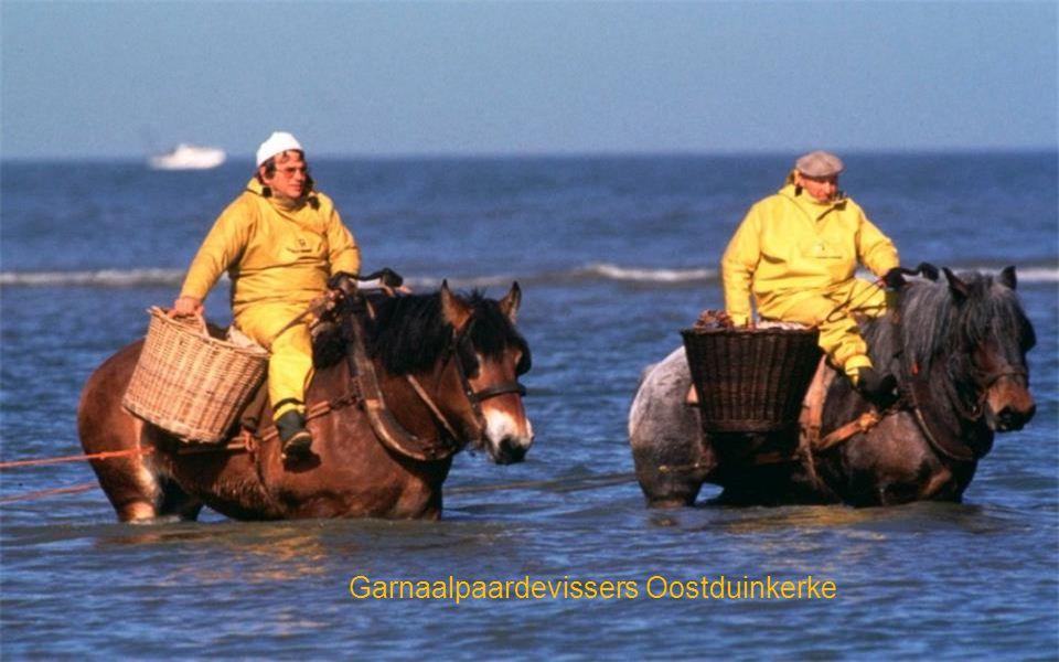 Garnaalpaardevissers Oostduinkerke