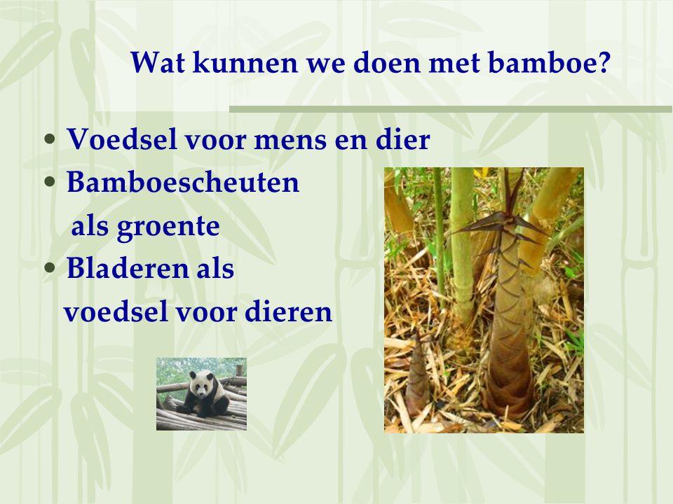 Wat kunnen we doen met bamboe? Voedsel voor mens en dier Bamboescheuten als groente Bladeren als voedsel voor dieren