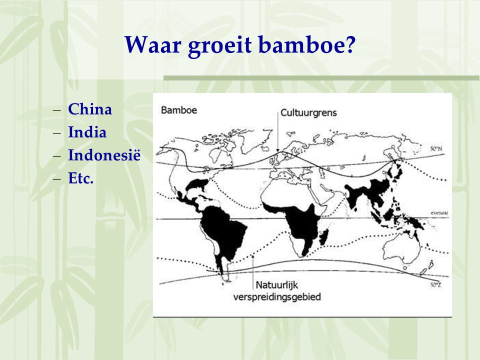 Waar groeit bamboe –China –India –Indonesië –Etc.
