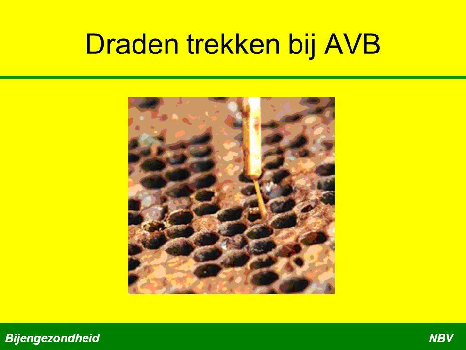 Draden trekken bij AVB BijengezondheidNBV