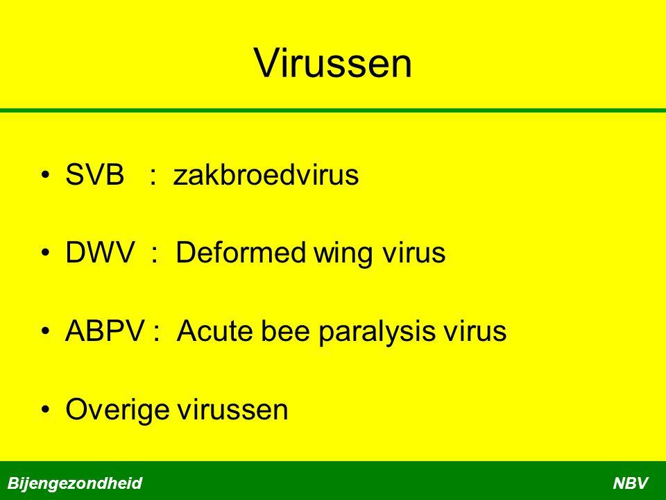 Virussen SVB : zakbroedvirus DWV : Deformed wing virus ABPV : Acute bee paralysis virus Overige virussen BijengezondheidNBV