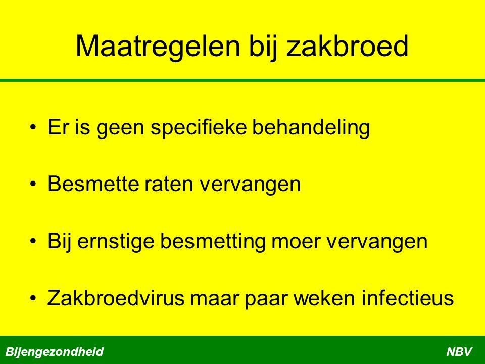 Maatregelen bij zakbroed Er is geen specifieke behandeling Besmette raten vervangen Bij ernstige besmetting moer vervangen Zakbroedvirus maar paar weken infectieus BijengezondheidNBV