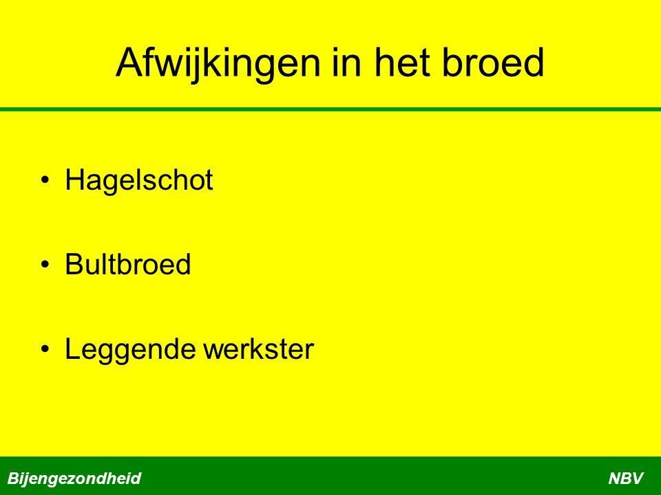 Afwijkingen in het broed Hagelschot Bultbroed Leggende werkster BijengezondheidNBV
