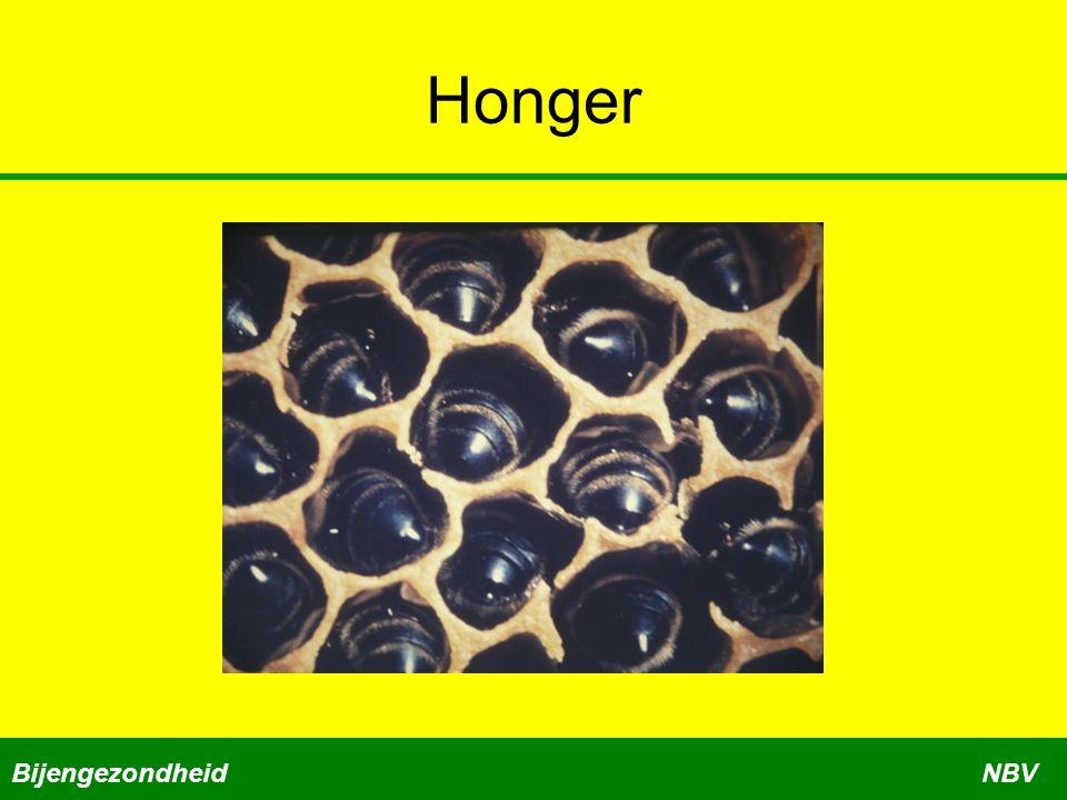 Honger BijengezondheidNBV