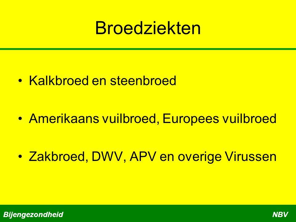 Broedziekten Kalkbroed en steenbroed Amerikaans vuilbroed, Europees vuilbroed Zakbroed, DWV, APV en overige Virussen BijengezondheidNBV