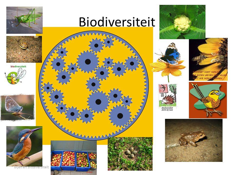 Bijen en Biodiversiteit3 Biodiversiteit