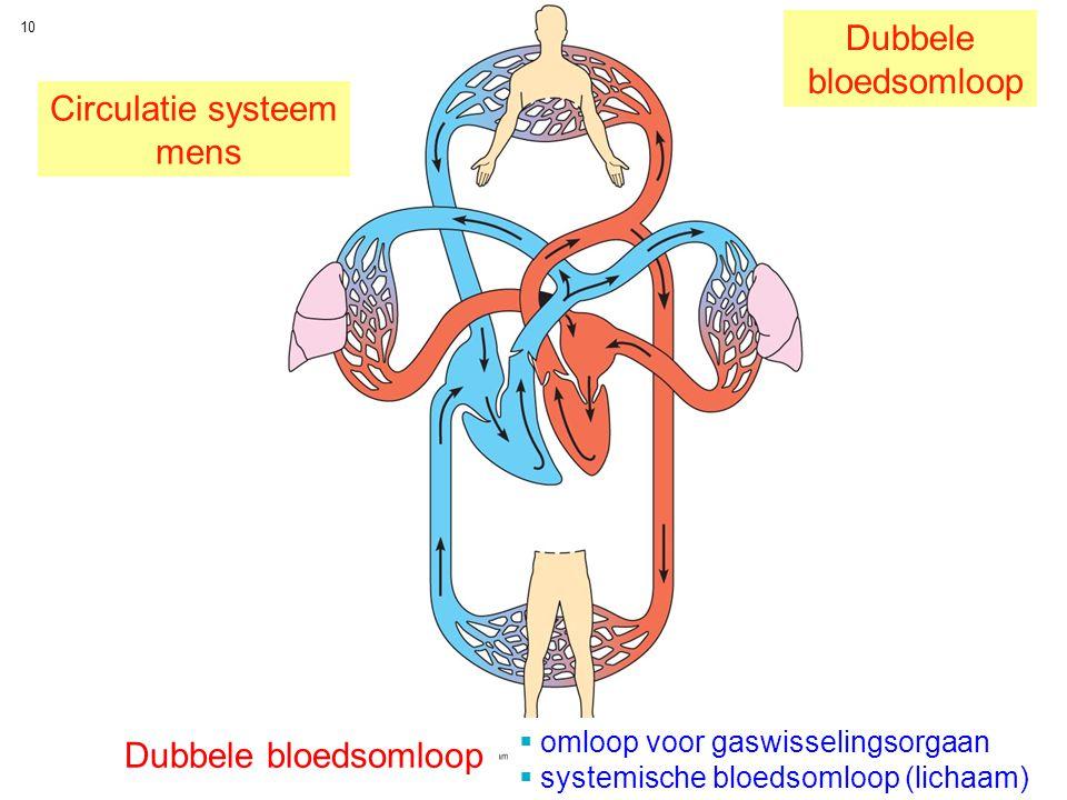 10 Circulatie systeem mens Dubbele bloedsomloop Dubbele bloedsomloop  omloop voor gaswisselingsorgaan  systemische bloedsomloop (lichaam)