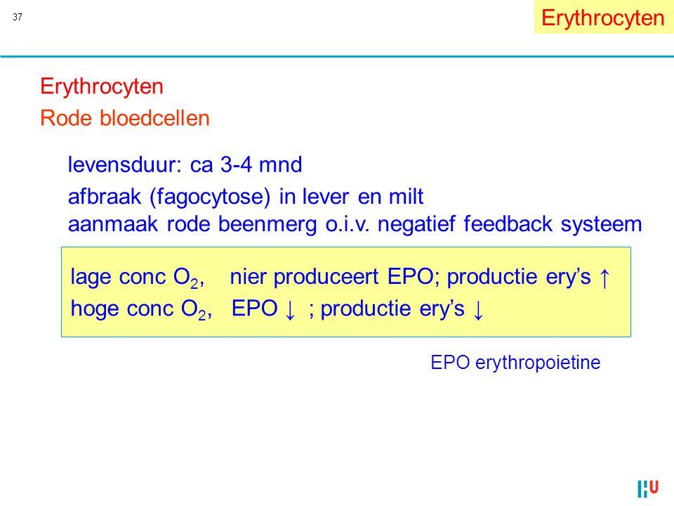 37 EPO erythropoietine Erythrocyten afbraak (fagocytose) in lever en milt aanmaak rode beenmerg o.i.v. negatief feedback systeem lage conc O 2, nier p