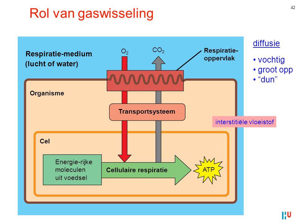 42 Rol van gaswisseling Organisme Cel Transportsysteem Cellulaire respiratie ATP Energie-rijke moleculen uit voedsel Respiratie- oppervlak Respiratie-