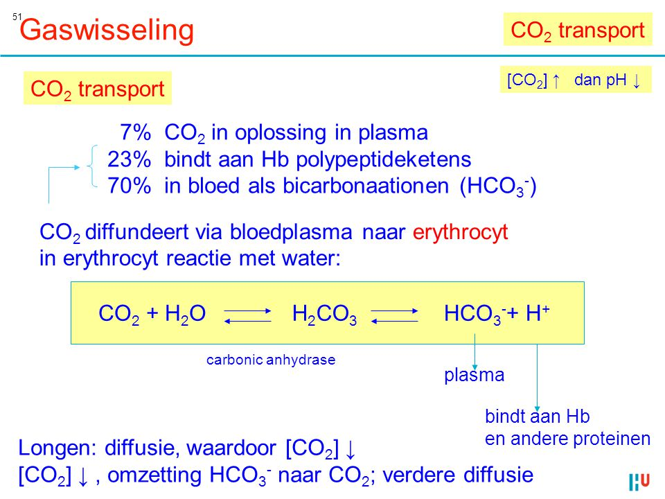 51 Gaswisseling [CO 2 ] ↑ dan pH ↓ CO 2 + H 2 OH 2 CO 3 HCO 3 - + H + CO 2 transport 7% CO 2 in oplossing in plasma 23% bindt aan Hb polypeptideketens