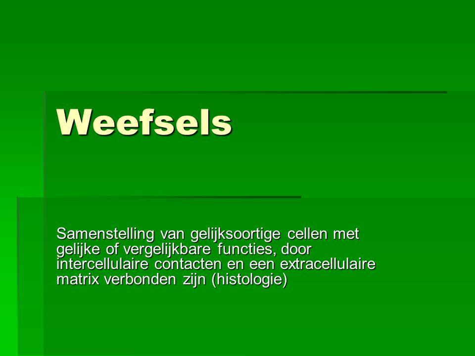 Soorten weefsels  Epitheel  Bindweefsel  Spierweefsel  Zenuwweefsel