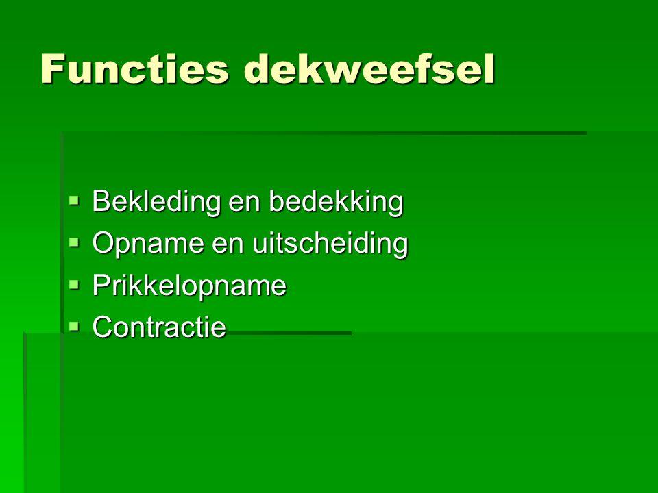 Functies dekweefsel  Bekleding en bedekking  Opname en uitscheiding  Prikkelopname  Contractie