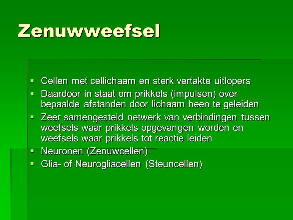 Zenuwweefsel  Cellen met cellichaam en sterk vertakte uitlopers  Daardoor in staat om prikkels (impulsen) over bepaalde afstanden door lichaam heen te geleiden  Zeer samengesteld netwerk van verbindingen tussen weefsels waar prikkels opgevangen worden en weefsels waar prikkels tot reactie leiden  Neuronen (Zenuwcellen)  Glia- of Neurogliacellen (Steuncellen)