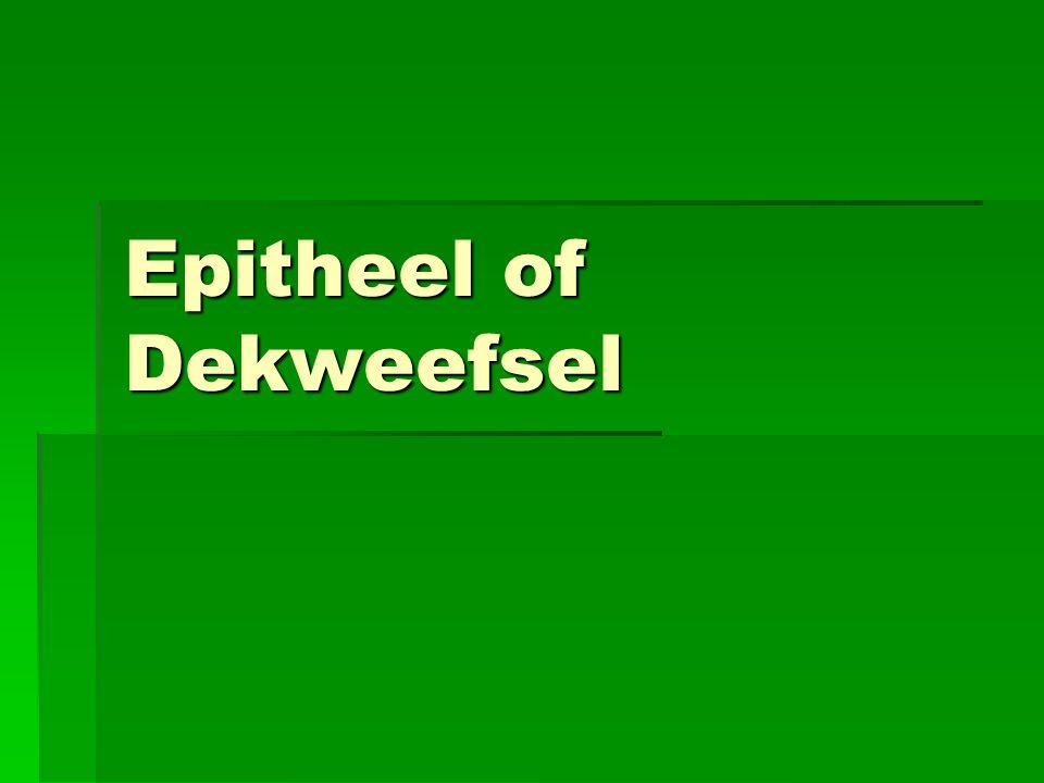 Epitheel of Dekweefsel