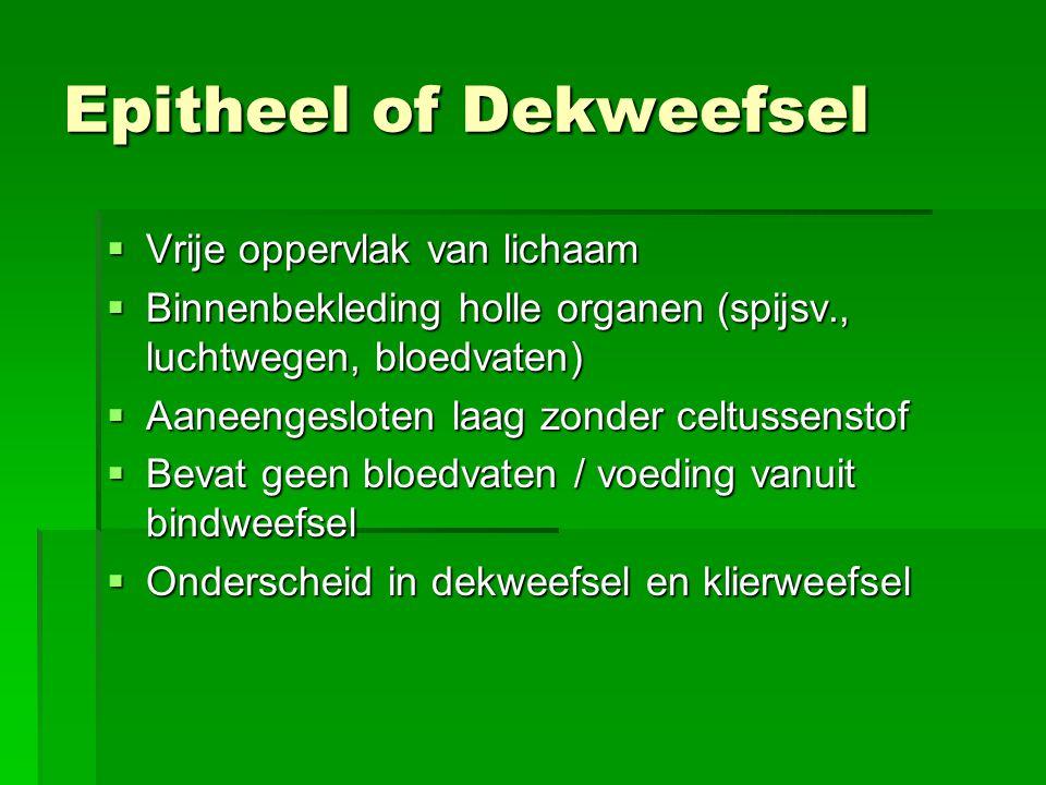 Dekweefsel 1 Eenlagig dekweefsel 2 Basaal membraan 3 Bindweefsel 4 Celtussenstof
