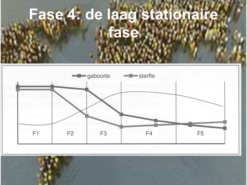 Fase 4: de laag stationaire fase