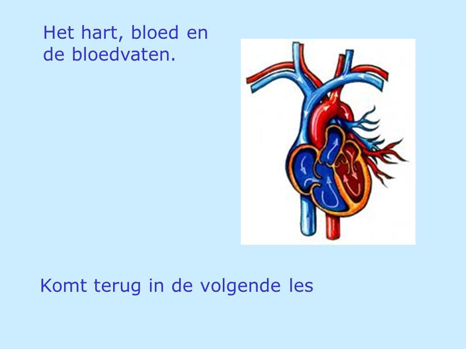 Het hart, bloed en de bloedvaten. Komt terug in de volgende les