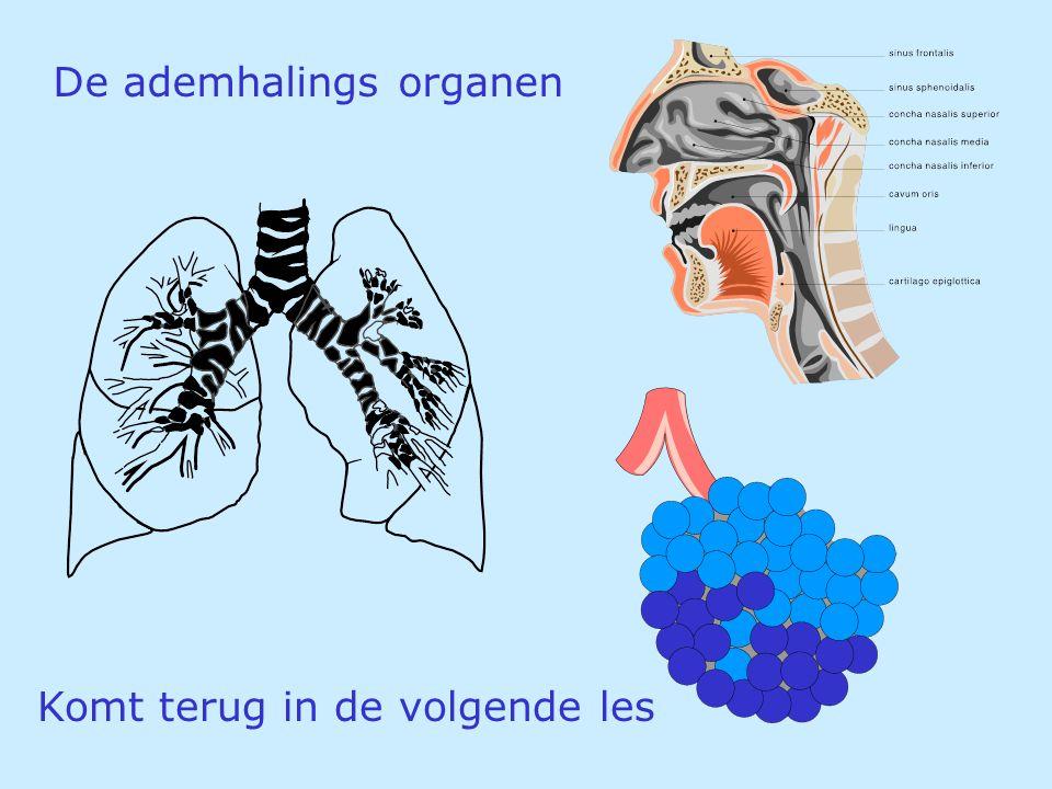 De ademhalings organen Komt terug in de volgende les