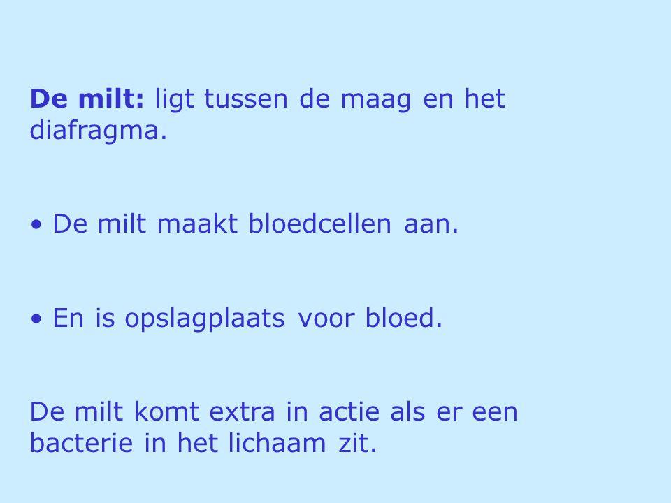 De milt: ligt tussen de maag en het diafragma. De milt maakt bloedcellen aan. En is opslagplaats voor bloed. De milt komt extra in actie als er een ba