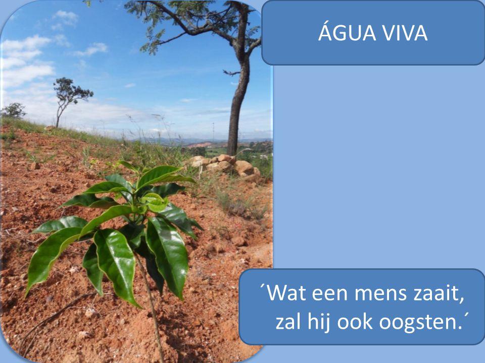 ÁGUA VIVA ´Wat een mens zaait, zal hij ook oogsten.´