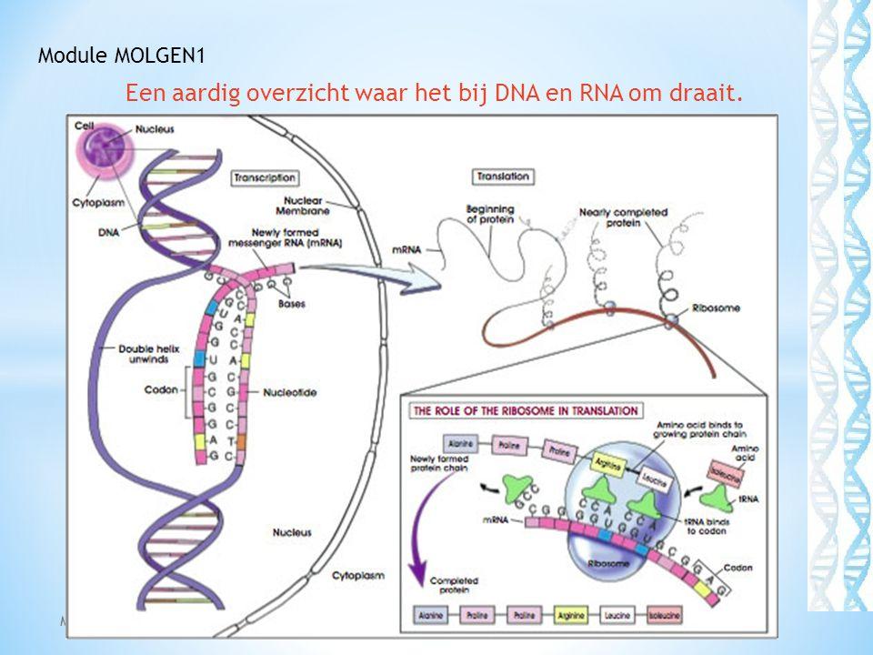 EIWITSYNTHESE (vereenvoudigd) Module: Molgen1 42 Module MOLGEN1 Het in de kern gemaakte mRNA (een prévorm ondergaat nog enkele nabewerkingsstappen zoals: 1.Aanbrengen van een 5`cap 2.Toevoegen van een poly-A-staart 3.Verwijderen van stukken mRNA die niet tot eiwit leiden: zgn introns.