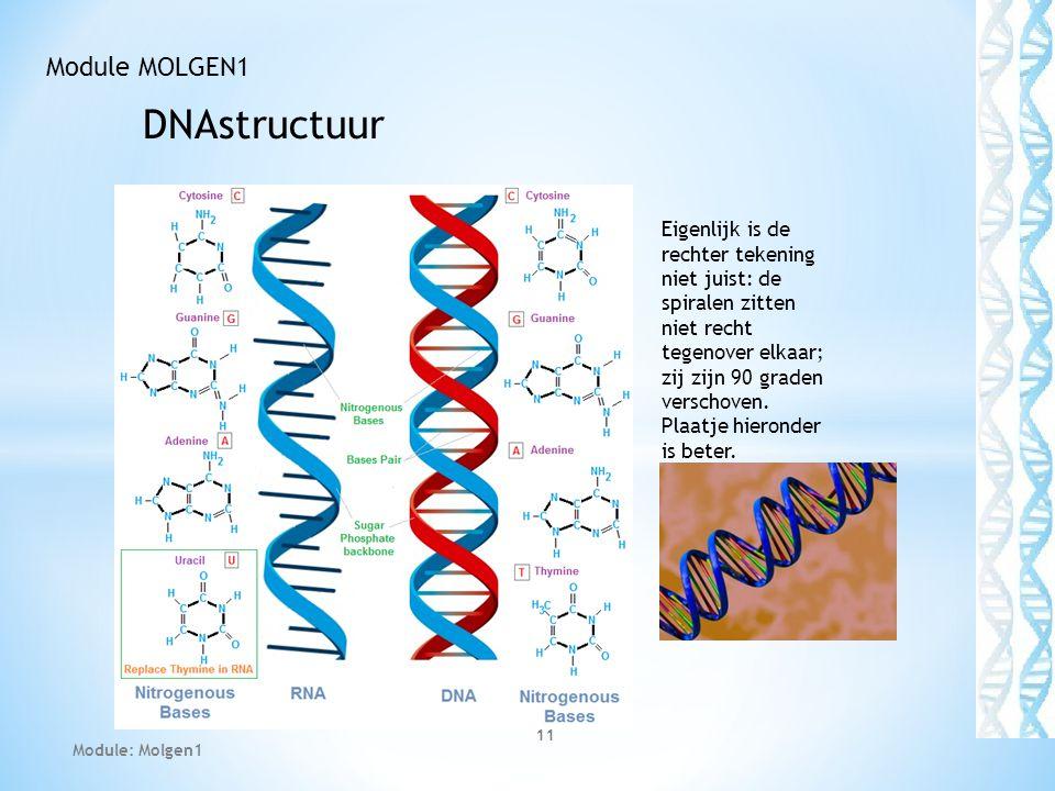 DNAstructuur 11 Module MOLGEN1 Module: Molgen1 Eigenlijk is de rechter tekening niet juist: de spiralen zitten niet recht tegenover elkaar; zij zijn 9