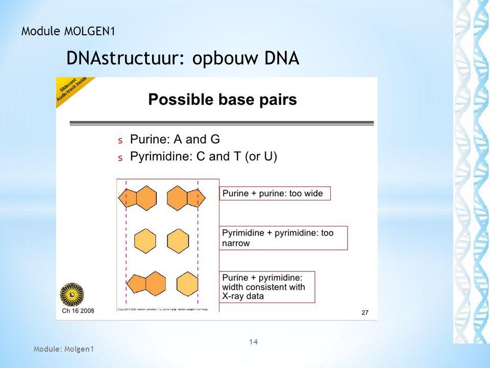 DNAstructuur: opbouw DNA 14 Module MOLGEN1 Module: Molgen1