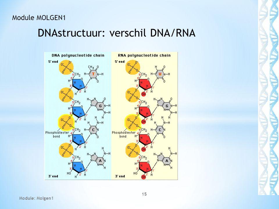 DNAstructuur: verschil DNA/RNA 15 Module MOLGEN1 Module: Molgen1