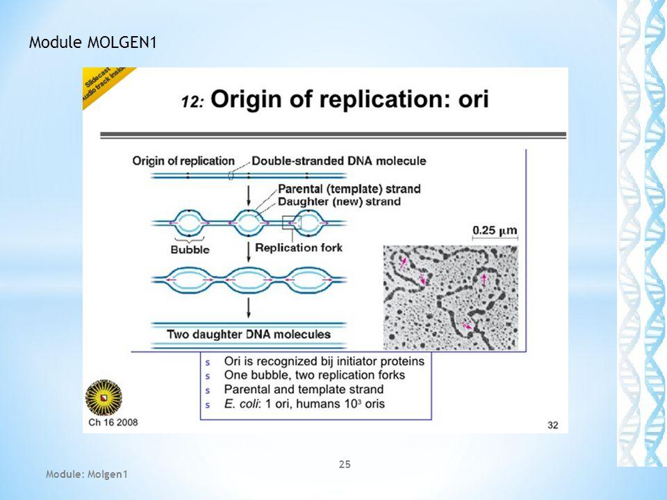 25 Module MOLGEN1 Module: Molgen1